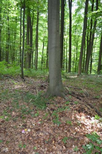 Bestattungen-schwedt-Baumbestattung-7